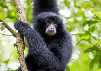 Discover Banham Zoo