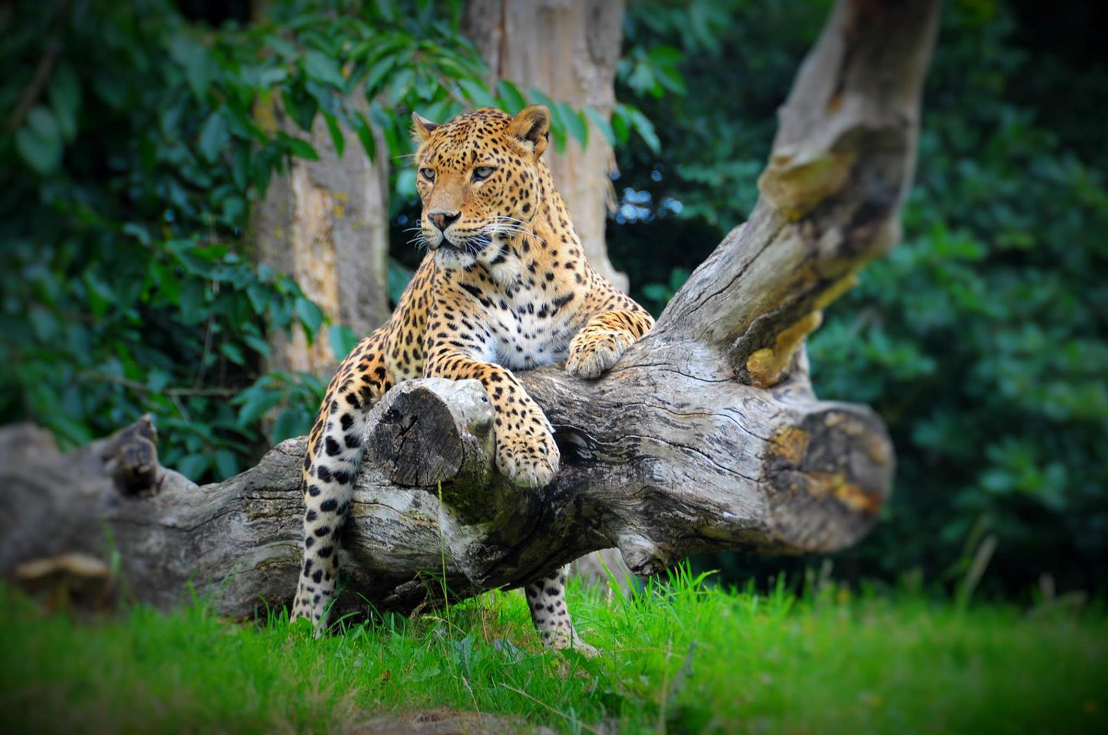 Applewood Special Entry Offer at Banham Zoo